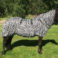 eksemtacke-zebra