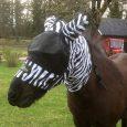 huva-zebra01